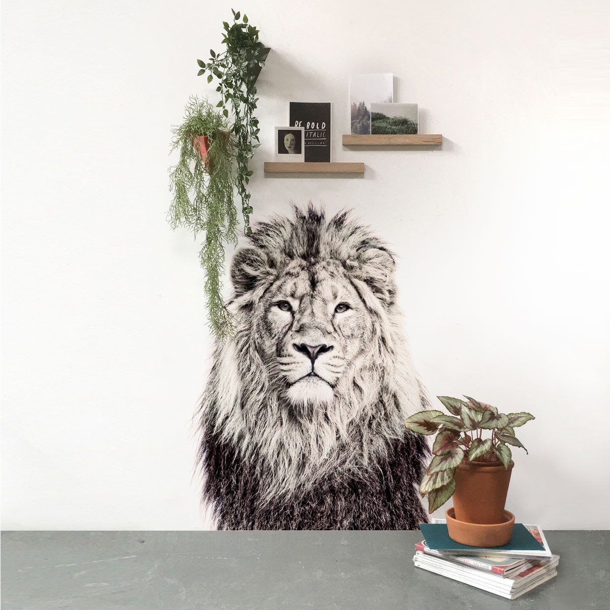 papier peint magn tique lion groovy magnets. Black Bedroom Furniture Sets. Home Design Ideas